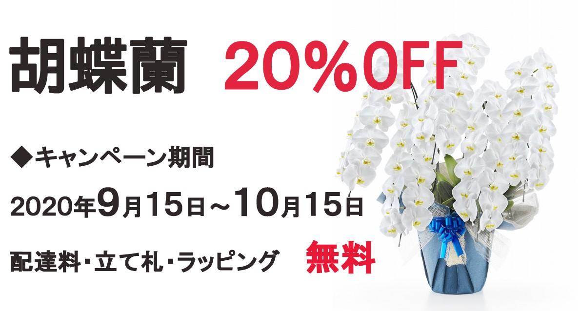 胡蝶蘭20%OFFキャンペーン-親切なお花屋さん(開店祝い.com)-